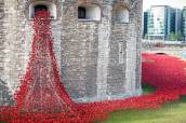London: Ceramic poppies planted at Tower of London to mark World War I deaths